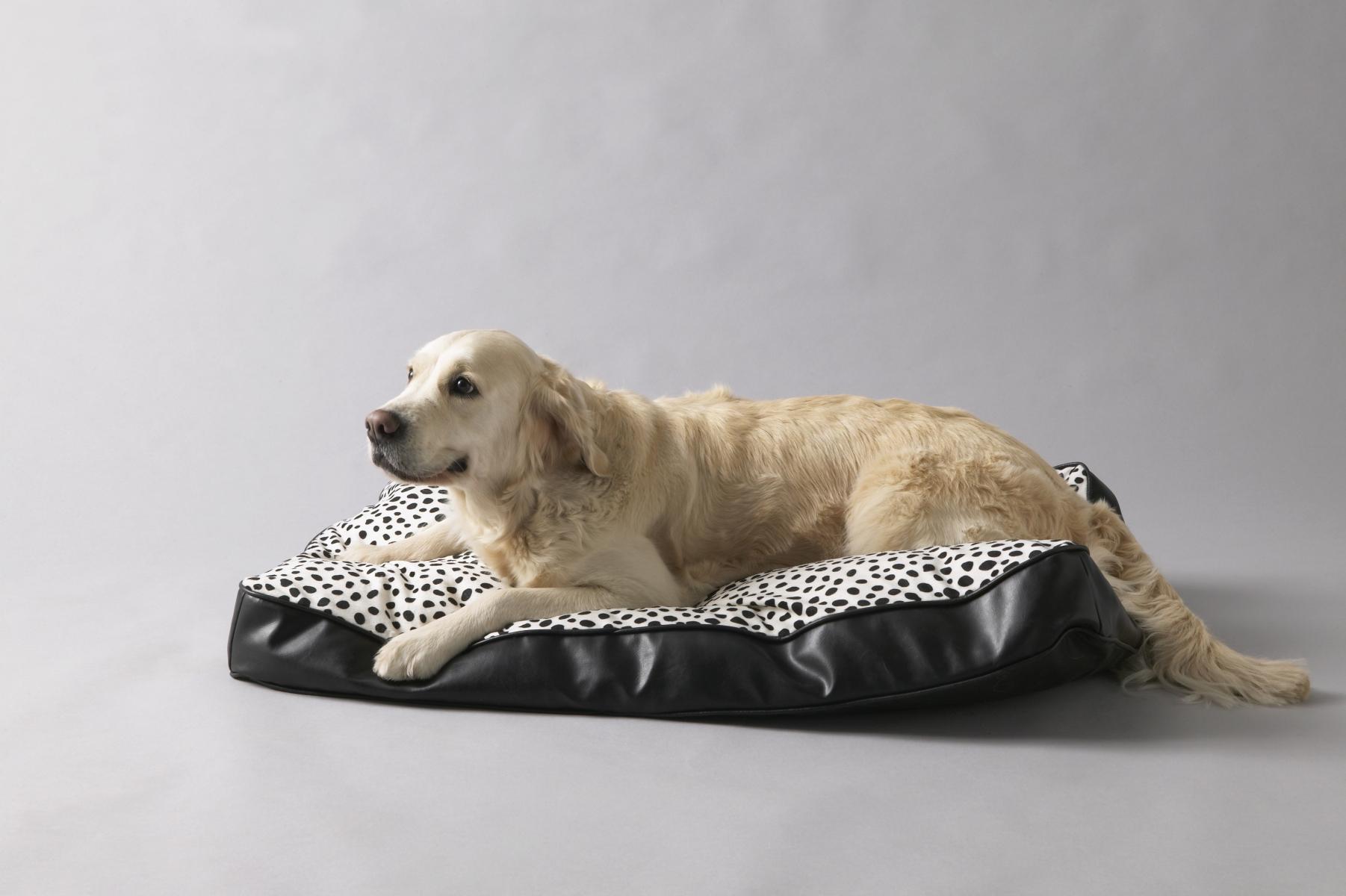 Cuscini per cani ikea casamia idea di immagine - Cuscini grandi ikea ...