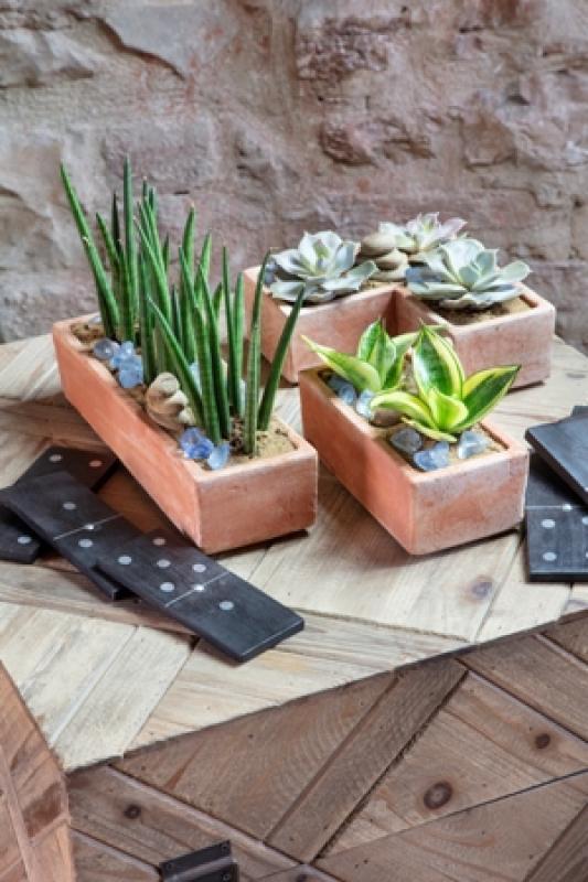 GARDEN SERVICE SRL - Linea moderne per piante grasse